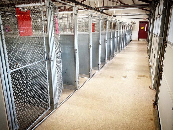 The dog kennels at the Ardmore Animal Shelter were almost empty on Friday afternoon after a busy week of adoptions and pulls from rescue agencies. Last week the shelter released 165 animals to rescue agencies to find homes in other states.