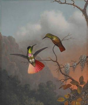 "Martin Johnson Heade's ""Hooded Visorbearer"" is part of the show at the Cummer Museum of Art & Gardens."
