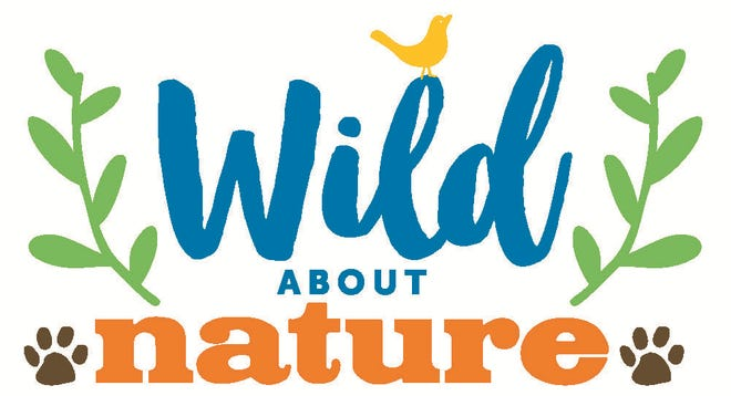 The Conservation Foundation of the Gulf Coast announces a virtual Wild About Nature experience.