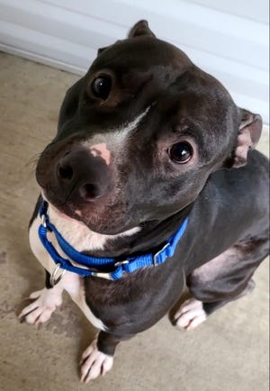 Donnie is two years old and looking at a home at the Humane Society of Ottawa County.