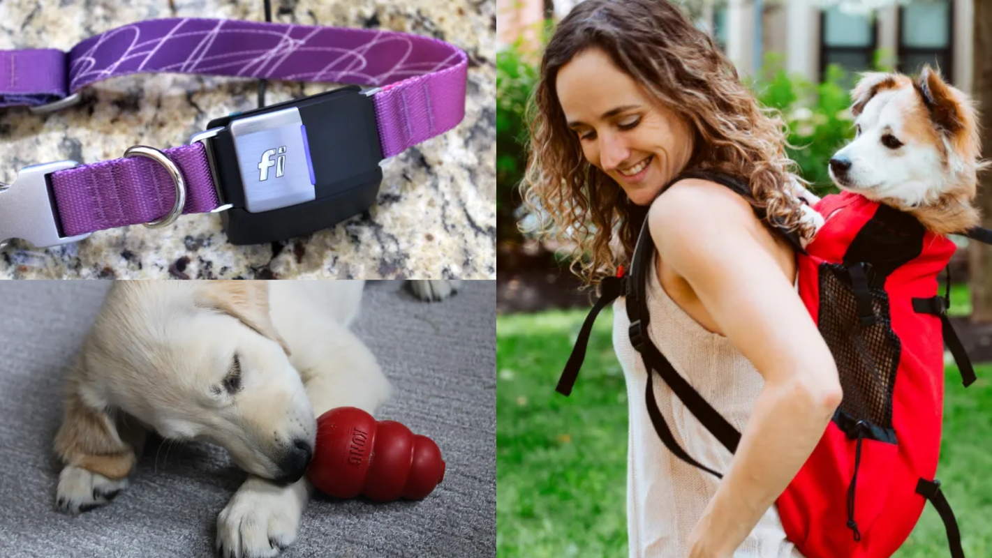 52 perfect gifts for dog lovers and owners