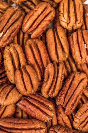 Pecans are members of the hickory family and grow on towering shade trees commonly found in yards, orchards and pastures throughout Alabama.