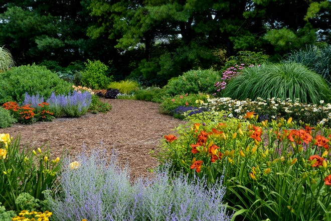 If your goals include adding color to your garden, consider flowering perennials such as day lilies, coneflowers and Russian sage.