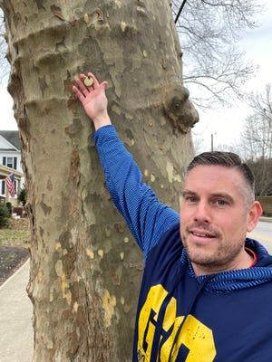 Jeremy Layman, chairman of the Greencastle Shady Tree Commission, shows a brass tag on a sycamore on East Baltimore Street. All the trees overseen by the commission were given numbers and tagged as part of an inventory.