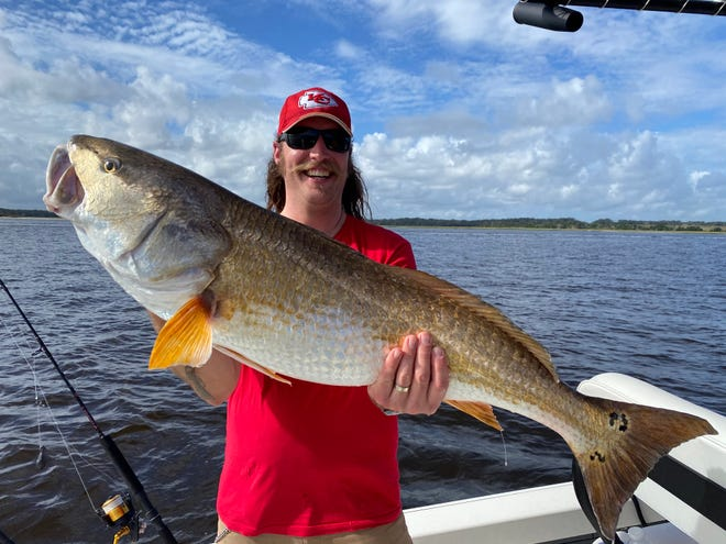 The bull redfish are still biting, including this giant St. Johns River specimen caught by a client of Capt. Jeremy Alvarez.