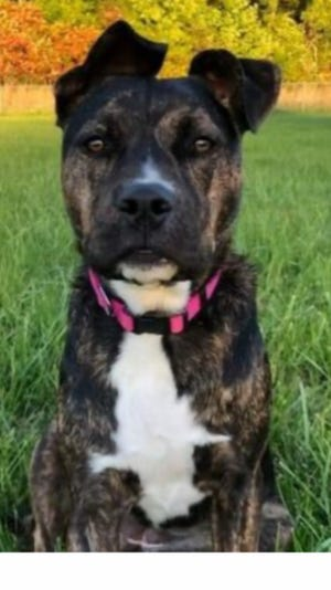 Nyla, who is 9 months old, escaped from her owners' vehicle around 3 p.m. Tuesday on Ohio 13 after her owner's vehicle was hit by a dump truck. The dog and owner were reunited Friday night.
