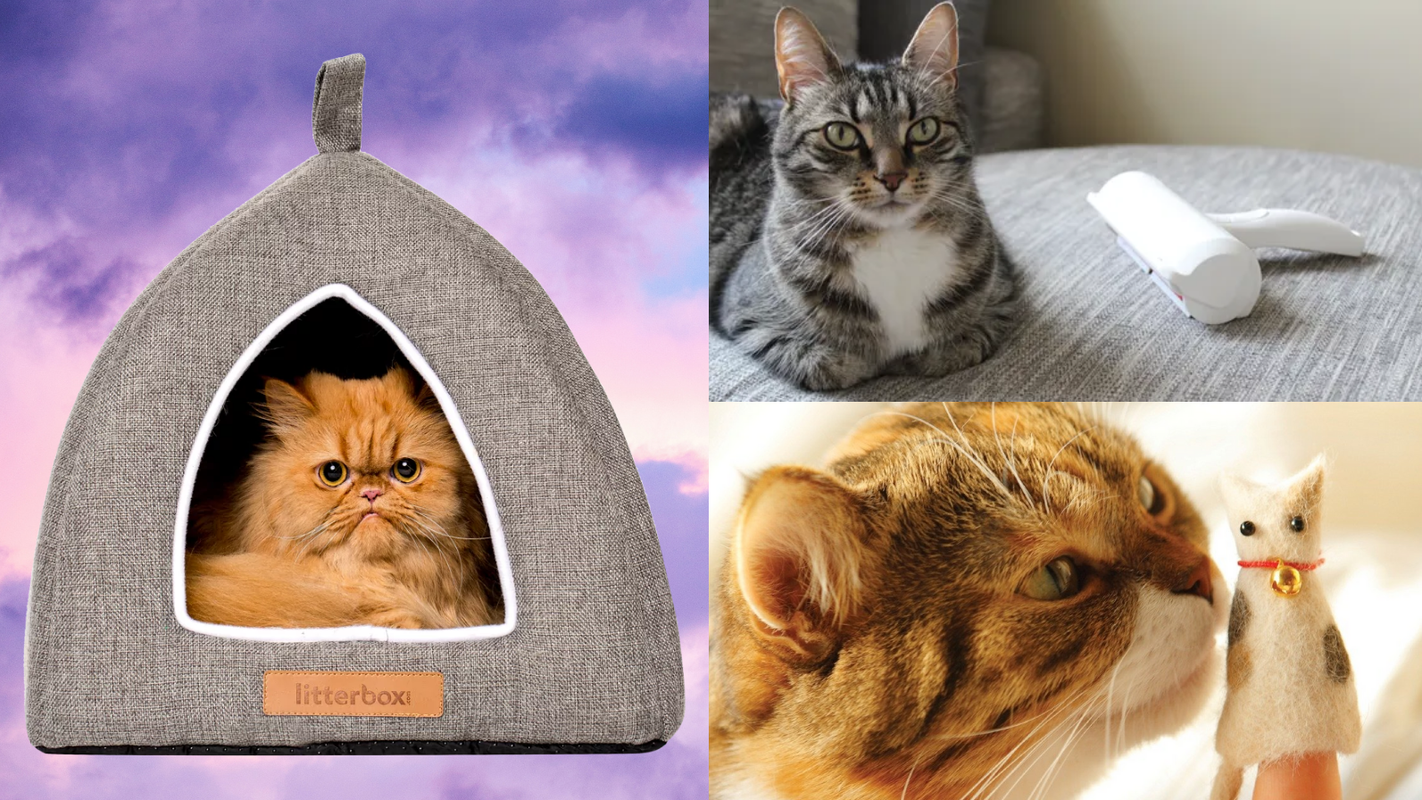 40 amazing gifts for cat lovers and owners