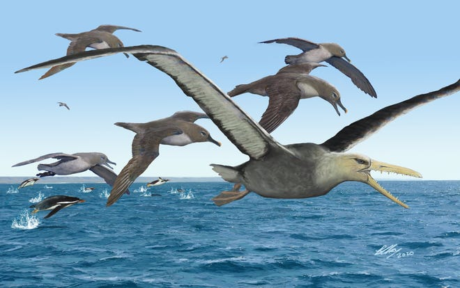 An artist's depiction of ancient albatrosses surrounding a pelagornithid in Antarctica 50 million years ago.