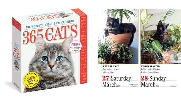 Best cat gifts: Cat-of-the-day calendar