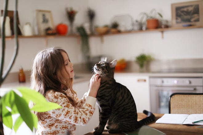 Sensitivities to cat allergens can be a major hurdle for cat lovers.