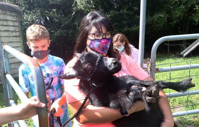 Agriculture teacher Amanda Ellis carries a goat named Thunder back to its pen after a brief escape with the help of her class, Wednesday Oct. 28, 2020, at Silver Sands Middle School in Port Orange.