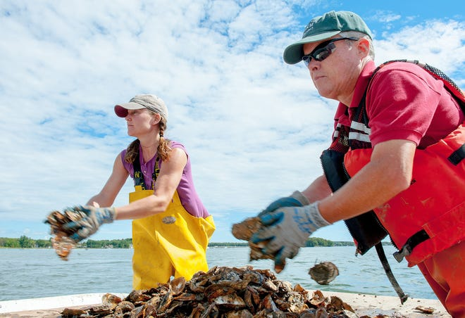 Ray Grizzle, biological sciences research professor, and Krystin Ward, lab research supervisor, both at the University of New Hampshire, distribute oyster shells in Great Bay as part of UNH's oyster restoration program.