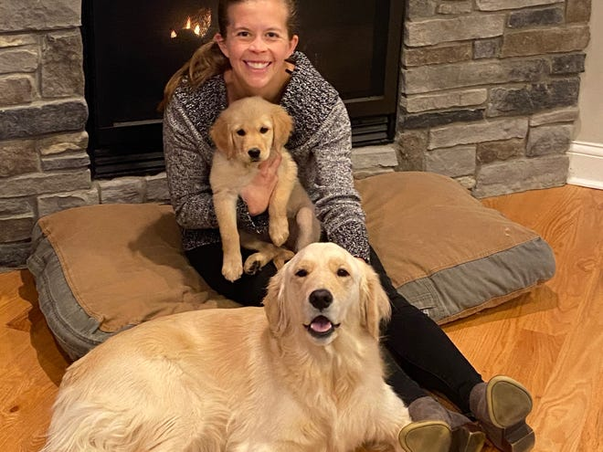 Stephanie Goggin, a resident physician at Beaumont Hospital in Royal Oak, took her 3-year-old golden retriever, Skelli (seen here laying in front of Goggin), to Doggie in the Window almost every day during the height of the pandemic. The 9-week-old puppy, Zimmi, is newly adopted.