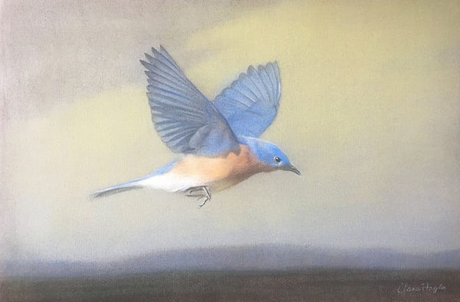 "Eastern Bluebird, a 12"" x 18"" pastel on paper by artist Elana Hagler, which will be presented as an award for the Business in the Arts Awards."
