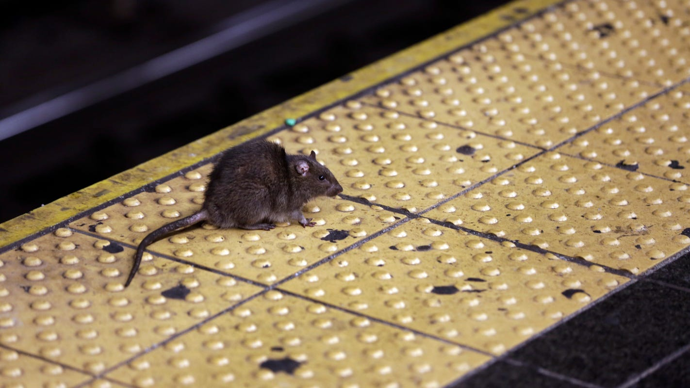 A man fell 10 feet through a New York City sidewalk. Then things got worse: 'Rats crawling on him, he can't move.'