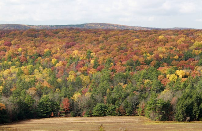 Reader Janie Ferguson captured this image of fall foliage in the Cameron area of Steuben County in late October.