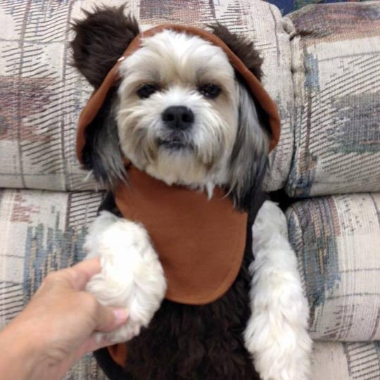 """Here is our little Ewok, Gracie,"" says Pam Miller of East Peoria, Illinois. Baby Yoda has nothing on you, Gracie."