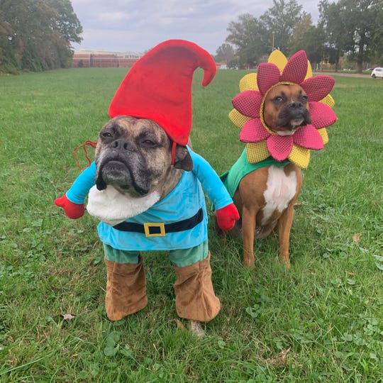 USA TODAY Life and Travel Managing Editor, and occasional newsletter writer, Alison Maxwell shared this picture of her two adorable boxers: Mikey the Gnome, Greta the Flower. Mikey is the most serious, pensive gnome I've ever seen.