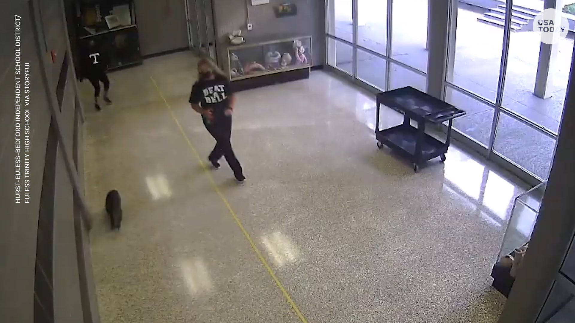 Wild raccoon leads Texas high school staff on wild chase through hallways