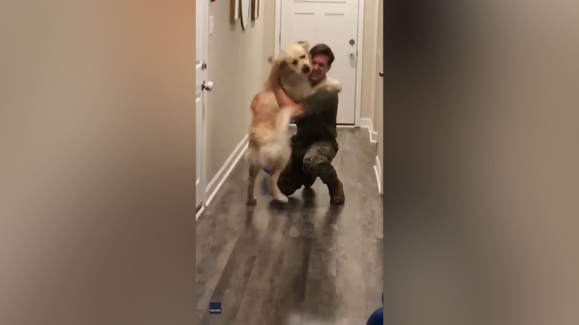 Giddy Golden Retriever leaps into dad's arms