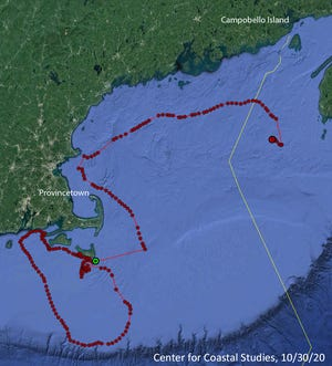A satellite telemetry buoy attached to an entangled North Atlantic right whale nicknamed Cottontail showed  the whale's 10-day, 700-mile journey from south of Nantucket to Yarmouth, Nova Scotia, in real time. [Center for Coastal Studies, Provincetown]