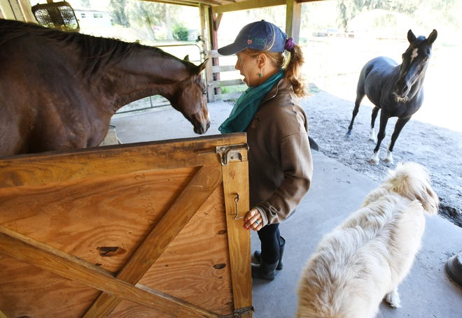Jessie Miller lets Buck, a 22-year-old former thoroughbred racehorse, from his stable stall to visit with other residents of One EPIC Farm. She and her husband run the farm animal sanctuary on Jacksonville's far north side.