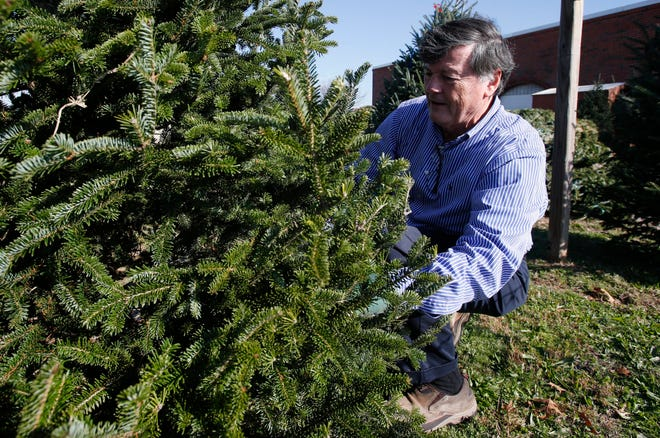 Jerry Humber checks the lower branches as he picks out a Christmas tree from the Y's Men's Club Christmas Tree Sale in front of the former Bruno's on McFarland Boulevard in Tuscaloosa on Friday, Nov. 24, 2017.
