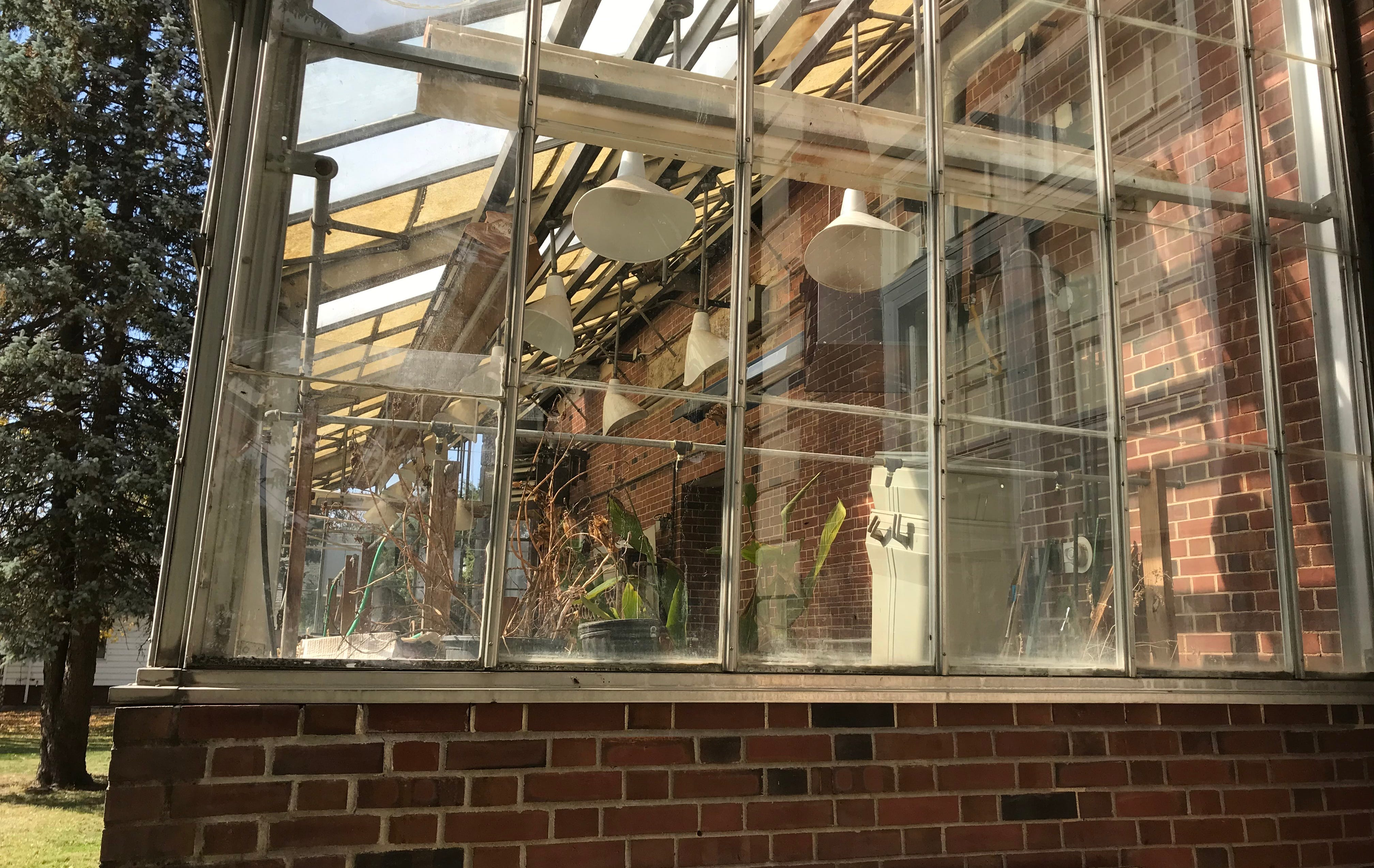 Wilted plants are seen in the greenhouse in the back of MacMurray Science Hall on the campus of the closed MacMurrary College in early fall 2020.