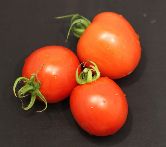Tomato growers in Florida and around the nation continue to face steep competition from Mexico.