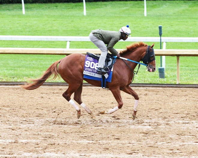 Trained by Steve Asmussen, Cowan is a contender for Friday's Breeders' Cup Juvenile Turf Sprint at Keeneland.