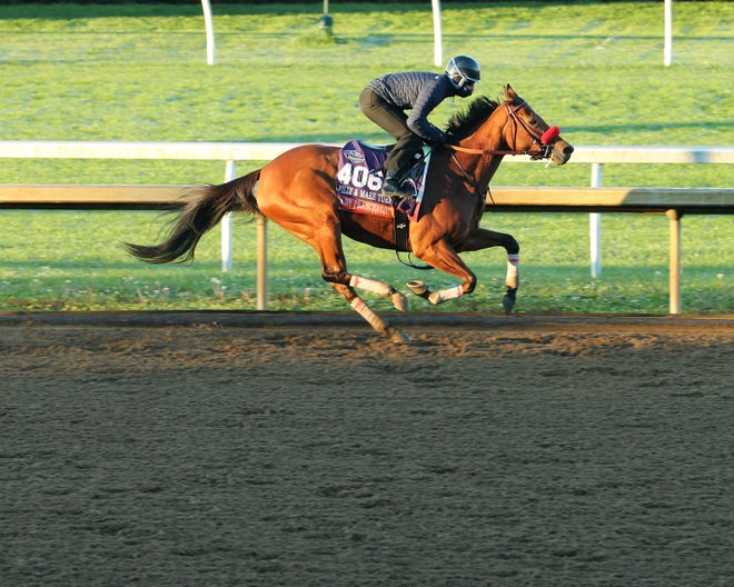 Trained by Richard Baltas, Lady Prancealot is a contender for Saturday's Breeders' Cup Filly & Mare Turf at Keeneland.