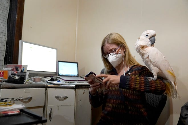 Jessica Murray pauses to look at her phone with her cockatoo Misha on her shoulder while working on website she started to honor lives lost to COVID-19 on Oct. 29 in St. Louis. Murray, who works in marketing and sales support for a construction firm and never worked as a writer, has provided mostly short life stories of those who've died in vignettes that are elegant and moving in their simplicity.