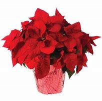 Billy Gray Ministries annual poinsettia drive is beginning now. They will be delivered to you Dec. 4 or 5. Medium red or medium and large white cost $20-26. Deadline to order is Nov. 30. Visit https://billy-gray-ministries.square.site/, call 719-244-8455 or email gjeffmurrell@hotmail.com.