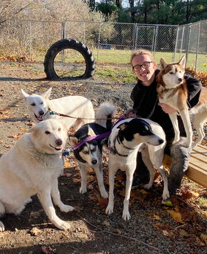 Owen Mahoney, a senior and the top runner on the Quabbin boys' cross country team, cross trains for the high school season by competing in sled dog racing and canicross, the sport of cross country running with dogs, with his family's five huskies: Kodaugh, Ramone, Rollo, Skai, and Tatum.