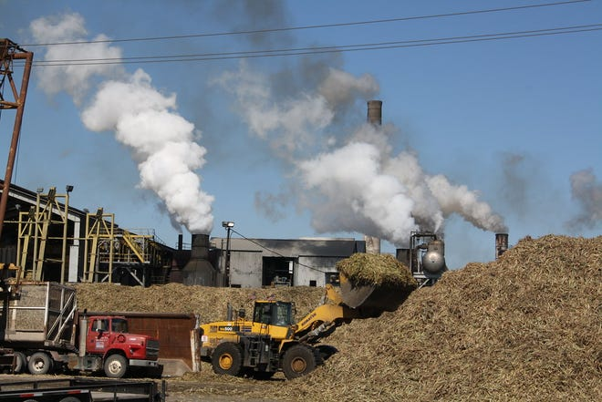 A robust harvest is expected for the 2020 harvest season at Cora-Texas Sugar Mill.