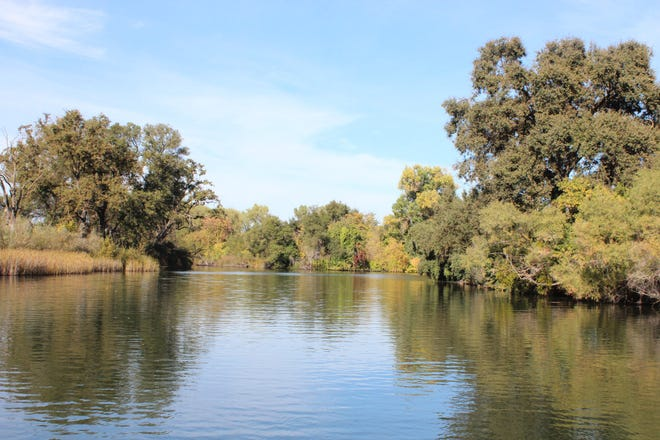 The Mokelumne River, shown here above Lodi Lake, has hosted record king salmon and steelhead runs in recent years.