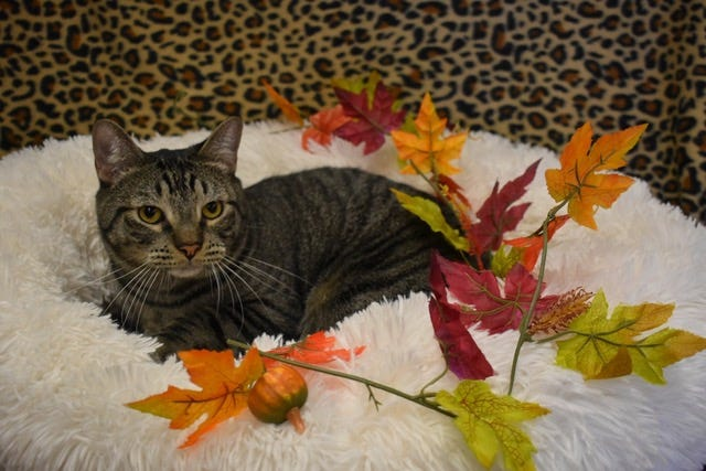 If you are interested in meeting Lucky D, please call Sun Cities 4 Paws Rescue, 623-876-8778 or 623-773-2246 after 10 a.m.
