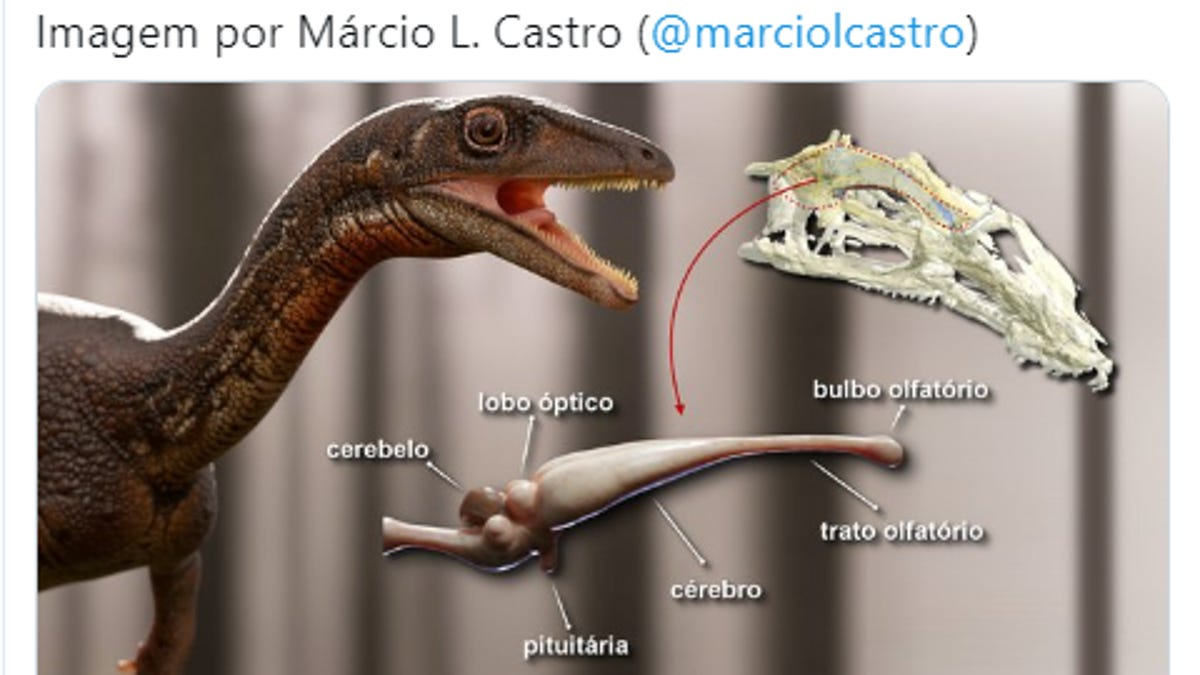 Brazilian Researchers Reconstruct First Complete Brain of Dinosaur