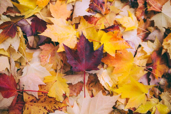 Fall is the time to manage leaves.