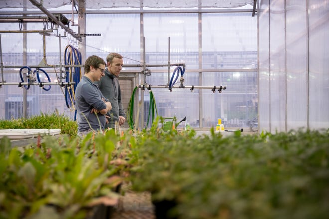 Scotts Miracle-Gro workers at the company's Marysville greenhouse.