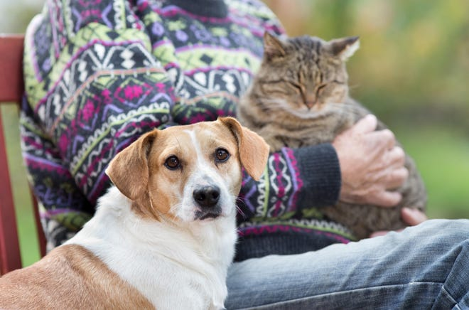 While puppies and kittens are popular, adopting an older pet has its own rewards.