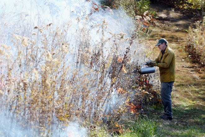 Volunteer George Gruenther uses a drip torch, during a timber burn by members of the Des Moines County Conservation and several volunteers, Thursday at Big Hollow Recreation Area near Sperry. The burn was part of the DMC Conservation's forest management efforts at the park to promote growth of the oak and hickory trees and to get rid of invasive tree species. Both timber and prairie burns are planned for next week, weather permitting.