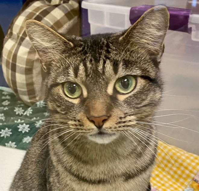 Wanda is looking for a new home and is waiting at the Oshkosh Area Humane Society.