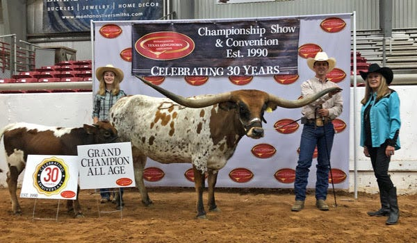 Kookachex, a 5-year-old Texas Longhorn, was judged ITLA International Champion All-Age Female of the 2020 show at Glen Rose, Texas. She is owned by Kirk and Linda Dickinson, of Barnesville. Pictured are, from left, Kara Dickinson, Doug Burris, and ITLA judge Lana Hightower.