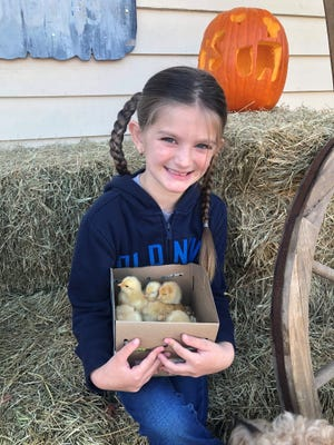 4-Her Paisley Boyd holds the chicks that will be her project for the Flagler County Fair.