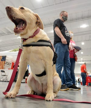 Army veteran Kevin Clark of Bristol applies for service dog next to Miley, a golden Labrador mix, from Forever In My Heart Friday at the 6th annual Vets Rock at Earth Expo & Convention Center at the Mohegan Sun Casino.  See more photos at NorwichBulletin.com [John Shishmanian/ NorwichBulletin.com]