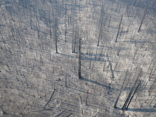 The high-severity Castle Fire burned through the Freeman Creek Grove of giant sequoia.