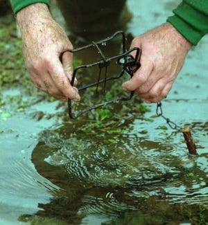 A trap is set for muskrat in a ditch in Fairfield County.