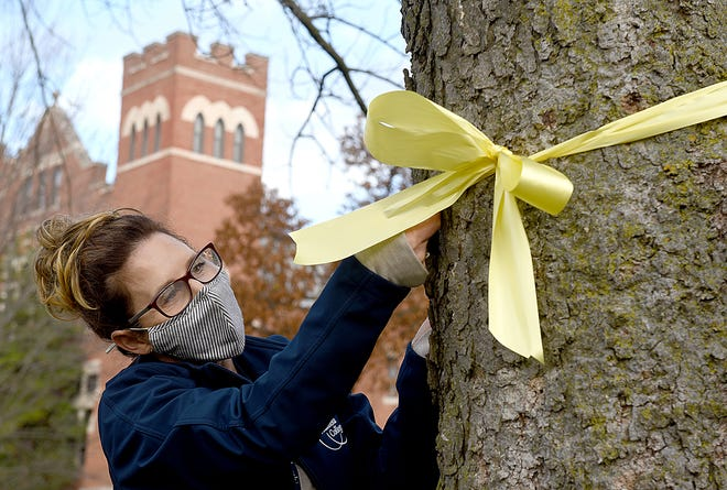 Lori Doherty, director of events at Columbia College, ties a yellow ribbon around a tree on campus on Monday in honor of Veterans Day this Wednesday.