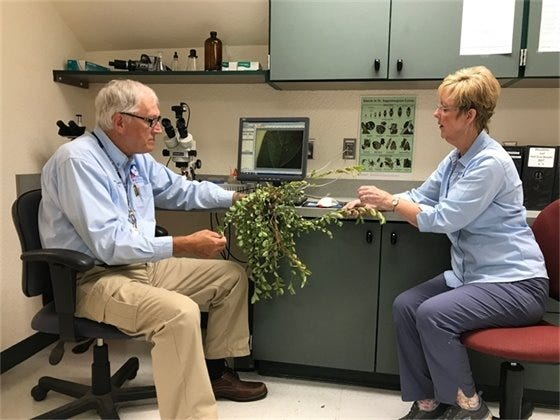 Master gardener volunteers Mike Burba and Suzanne Spencer examine a sample in the north plant clinic in Milton.